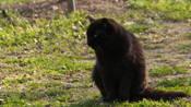 亀城公園の猫.jpg